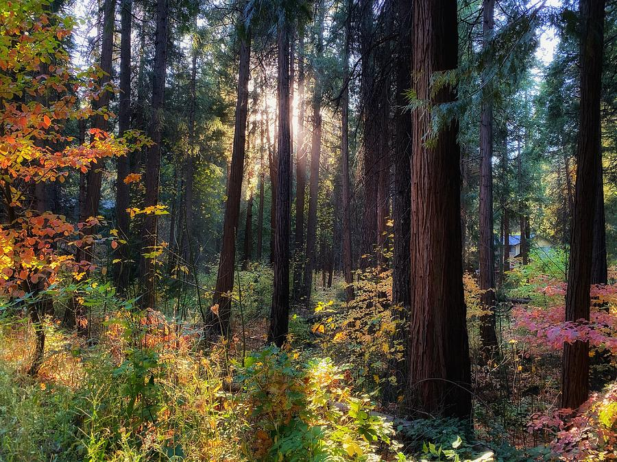 Fall Forest by Steph Gabler
