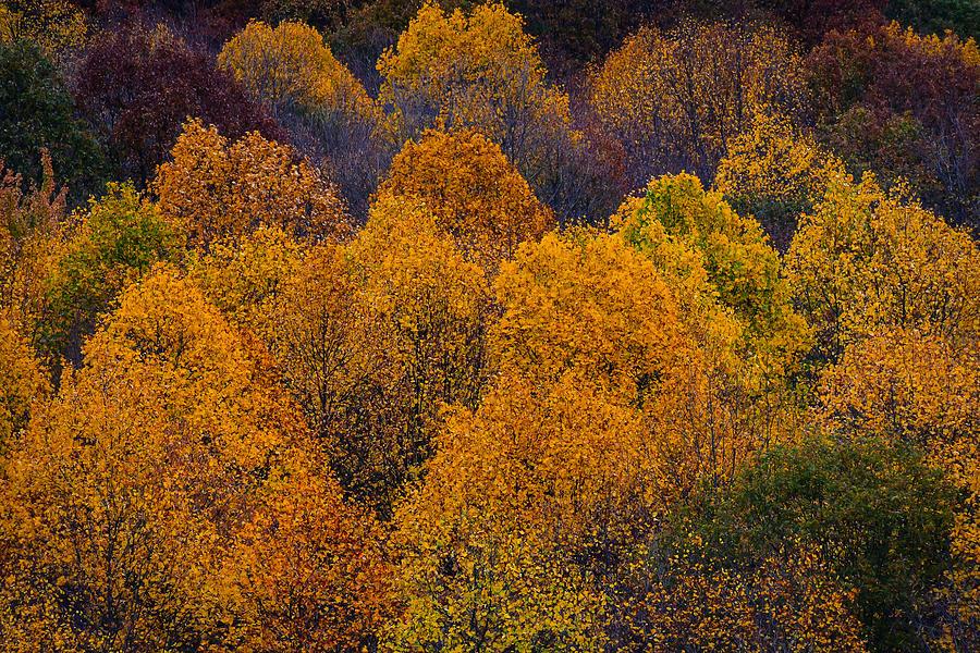 Fall In Pennsylvania Photograph