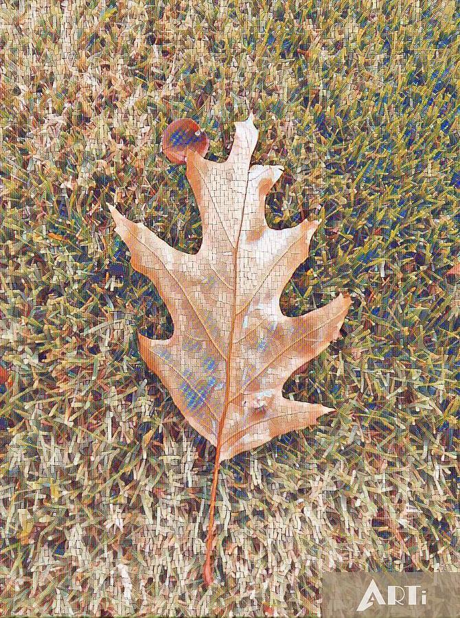 Fall leaf by Steven Wills