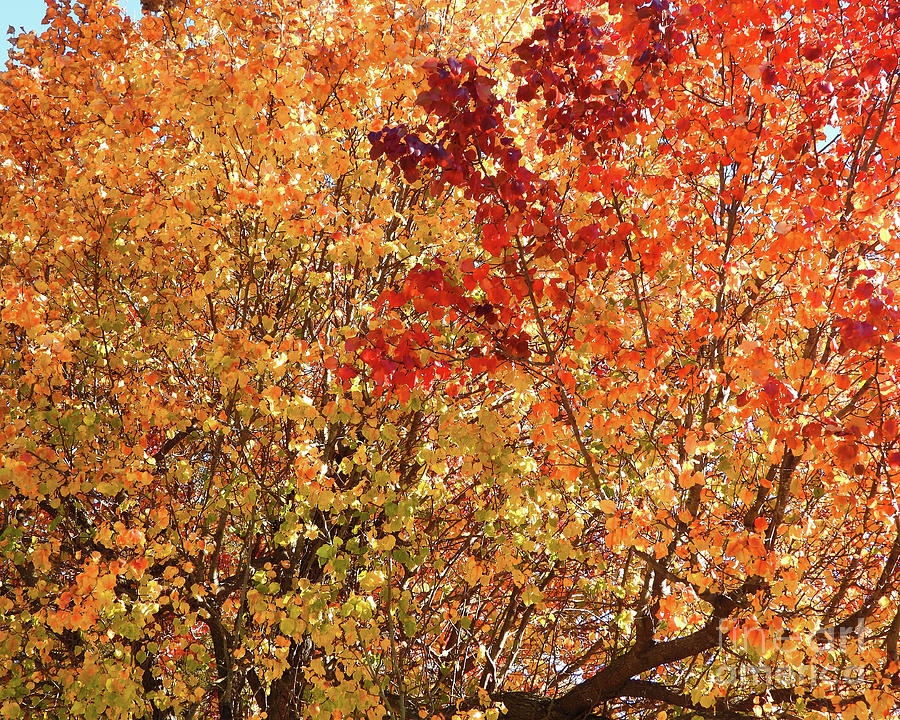 Fall Leaves - A Beauty of Nature by Scott Cameron