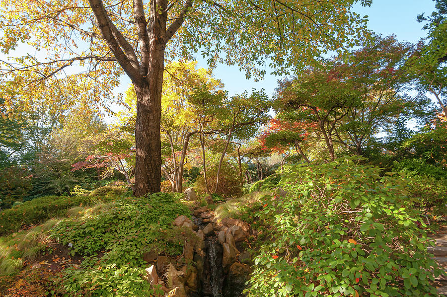 Fall Time in  Japanese Garden by Jenny Rainbow