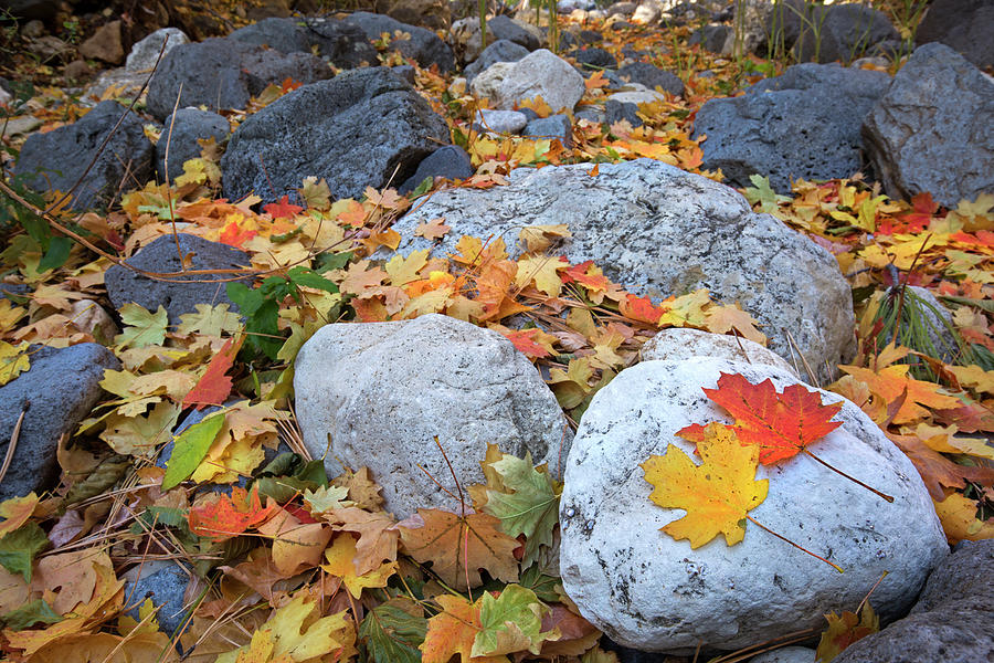Fallen Autumn Leaves by Sue Cullumber