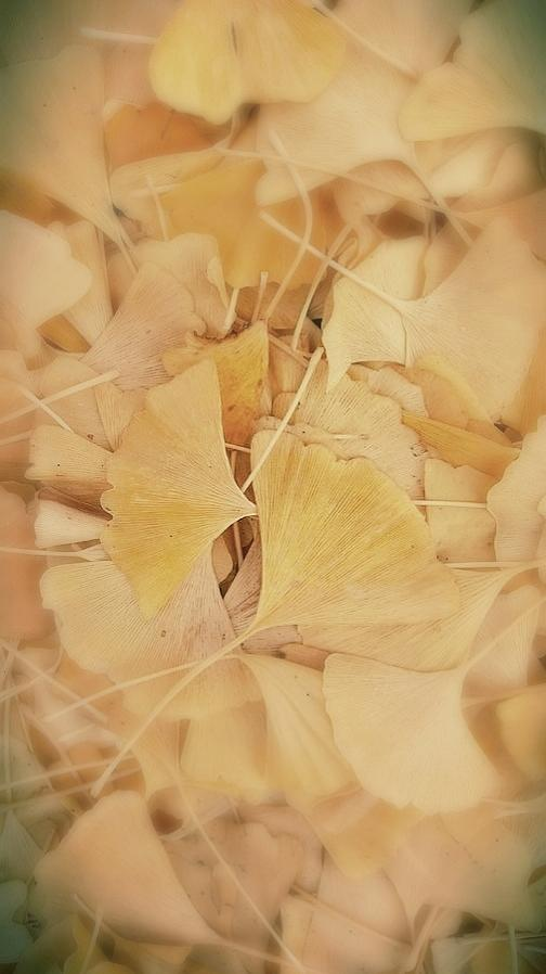 Fallen Ginseng Leaves by Kathy Barney
