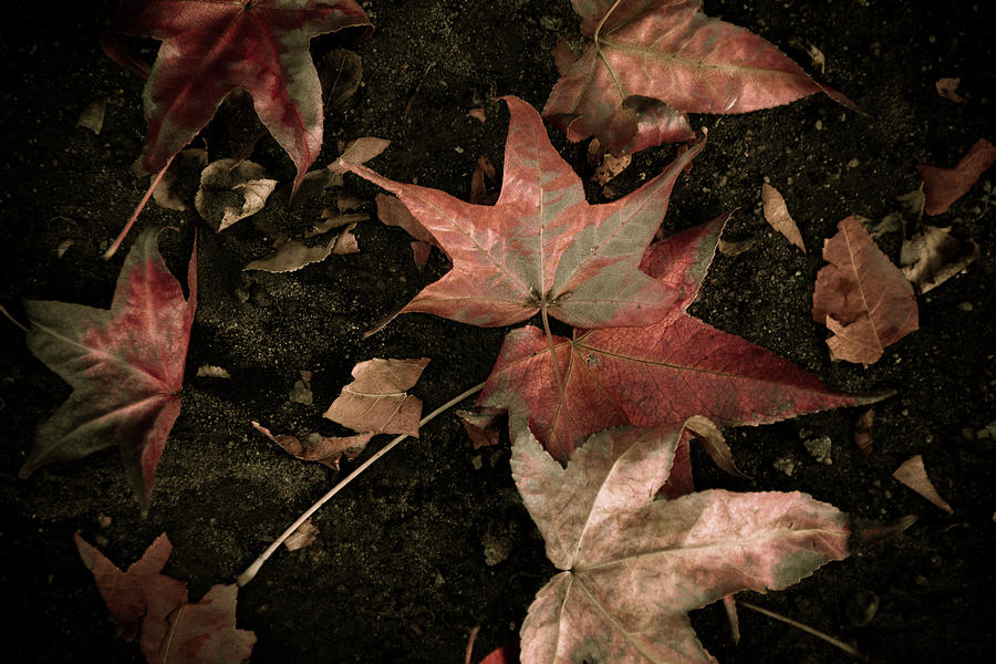Fallen leaves by Jay Binkly