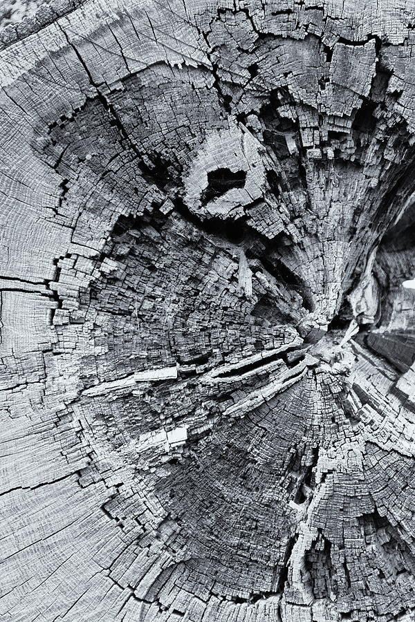 Fallen Tree Monochrome Photograph