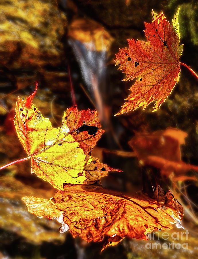Falling Leaves Fall Colors by Dan Carmichael