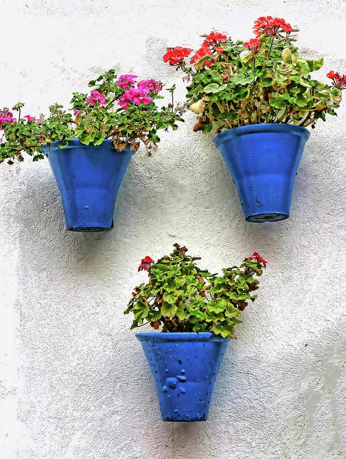 Famous Cordoba Blue Flowerpots # 2 Photograph