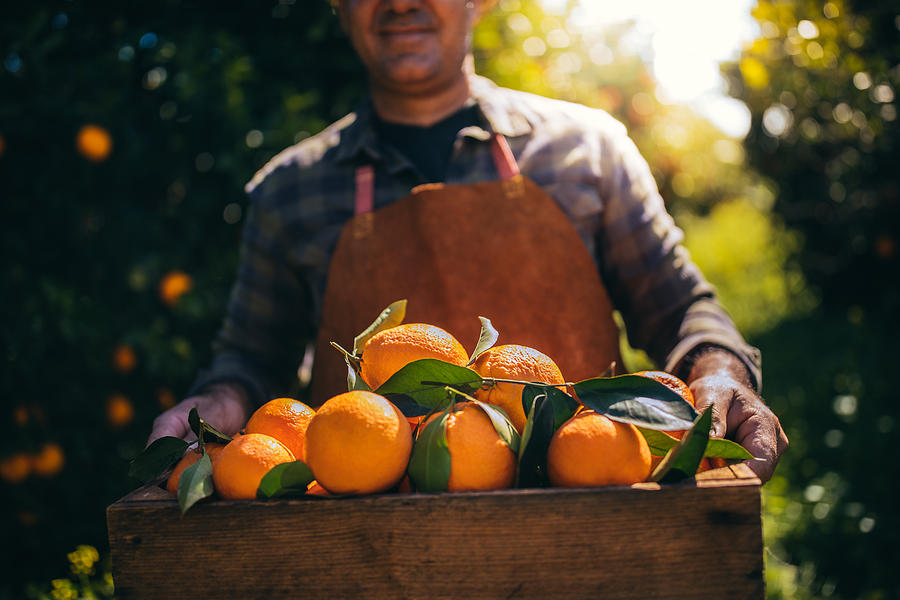 Farmer holding wooden box with fresh oranges in orchard Photograph by Wundervisuals