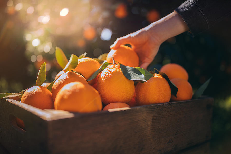 Farmer taking fresh orange from wooden box in orange orchard Photograph by Wundervisuals