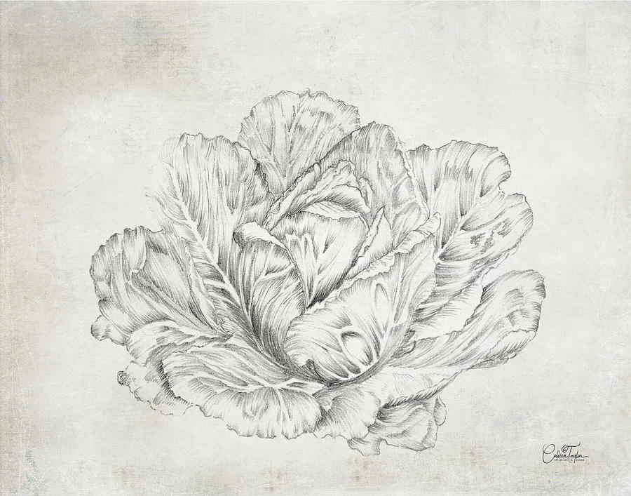 Farmhouse Cabbage by Colleen Taylor