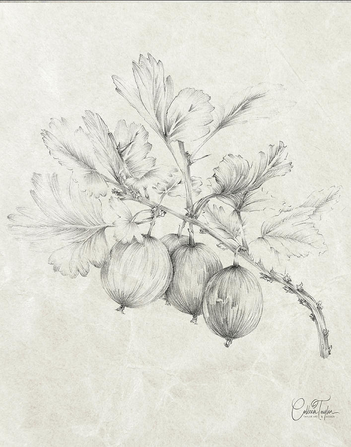Farmhouse Gooseberries by Colleen Taylor