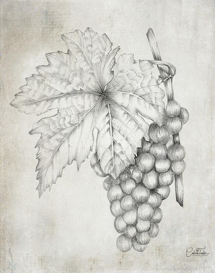Farmhouse Grapes by Colleen Taylor