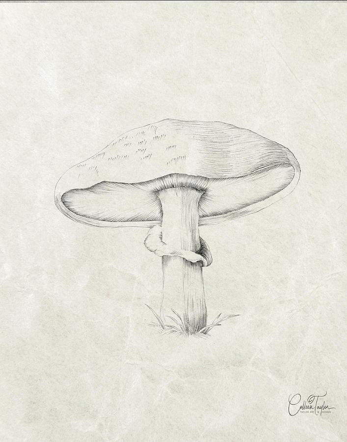 Farmhouse Mushroom by Colleen Taylor