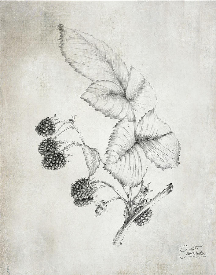 Farmhouse Raspberries by Colleen Taylor