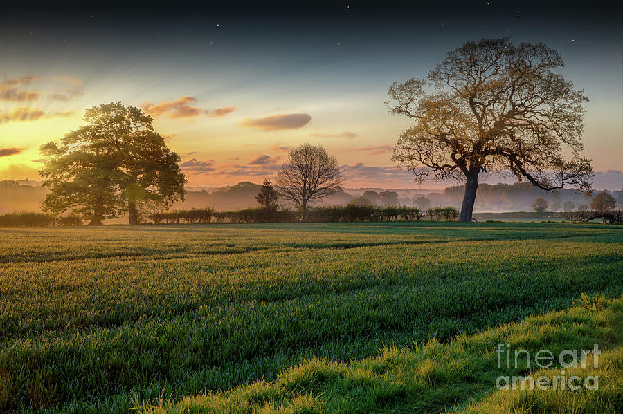 Farmland sunrise and trees landscape by Simon Bratt Photography LRPS
