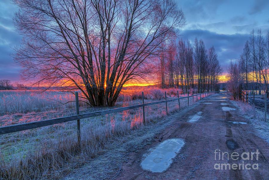 February Morning Photograph