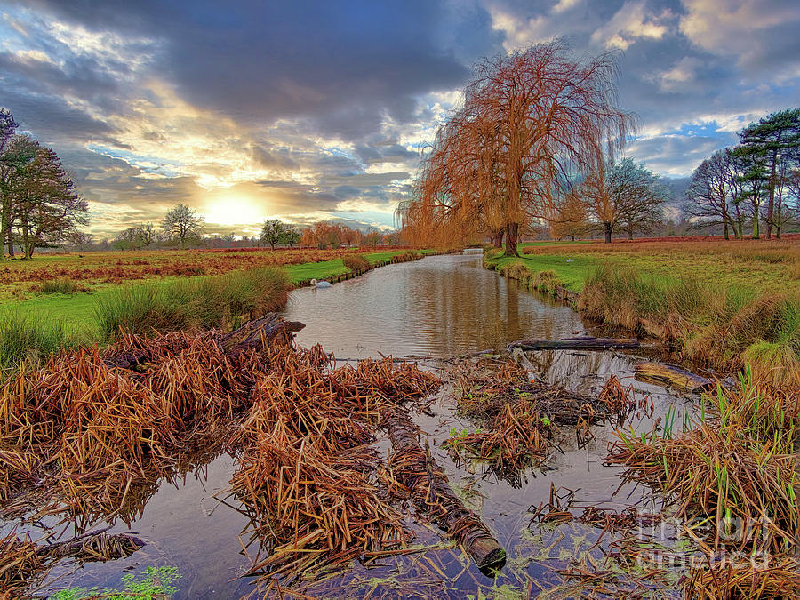 Bushy Park Photograph - Feeling At One With Nature by Leigh Kemp