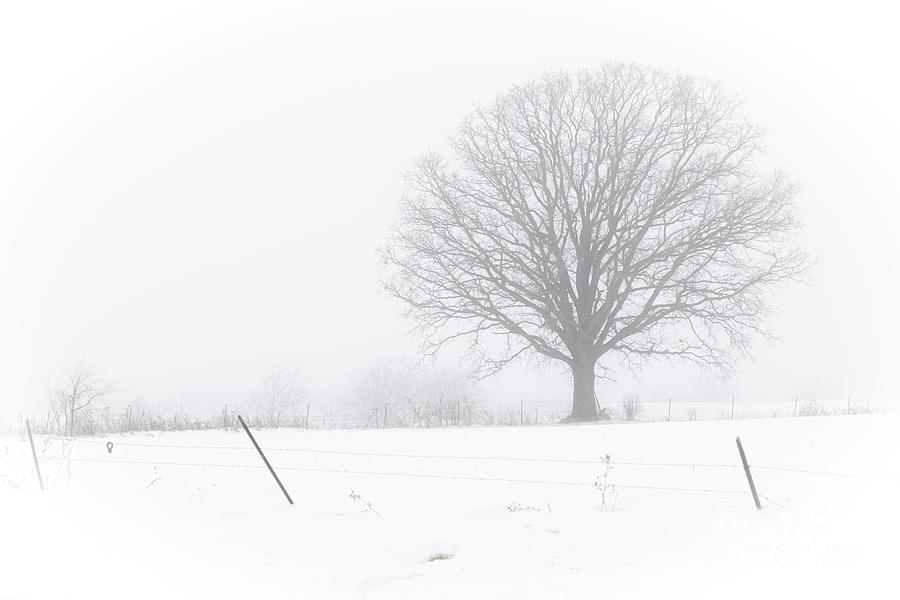 Feeling the Fog by Amfmgirl Photography