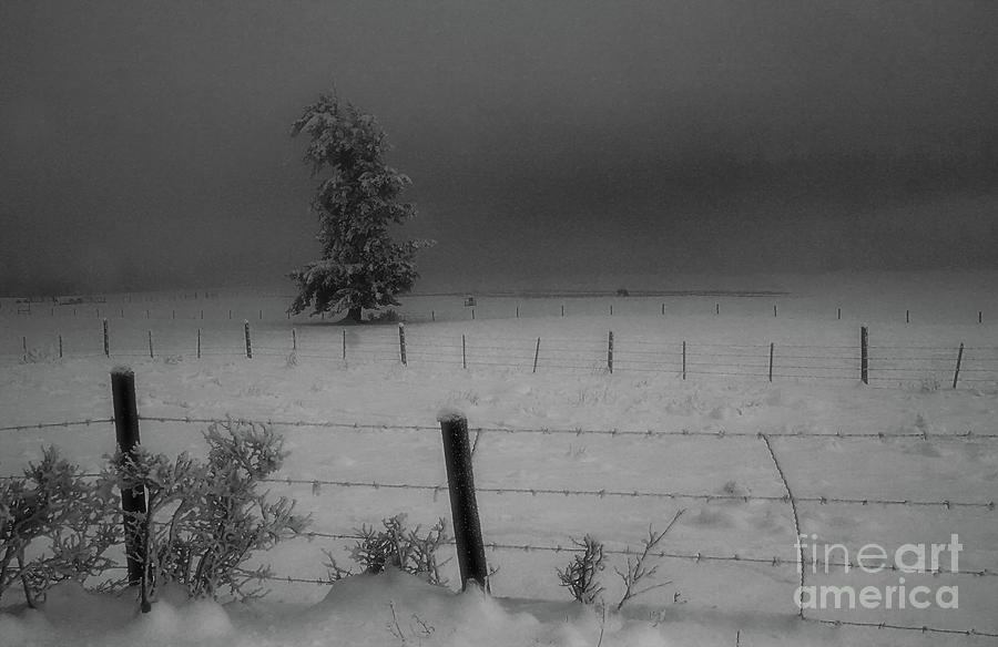 Fence Lines Photograph