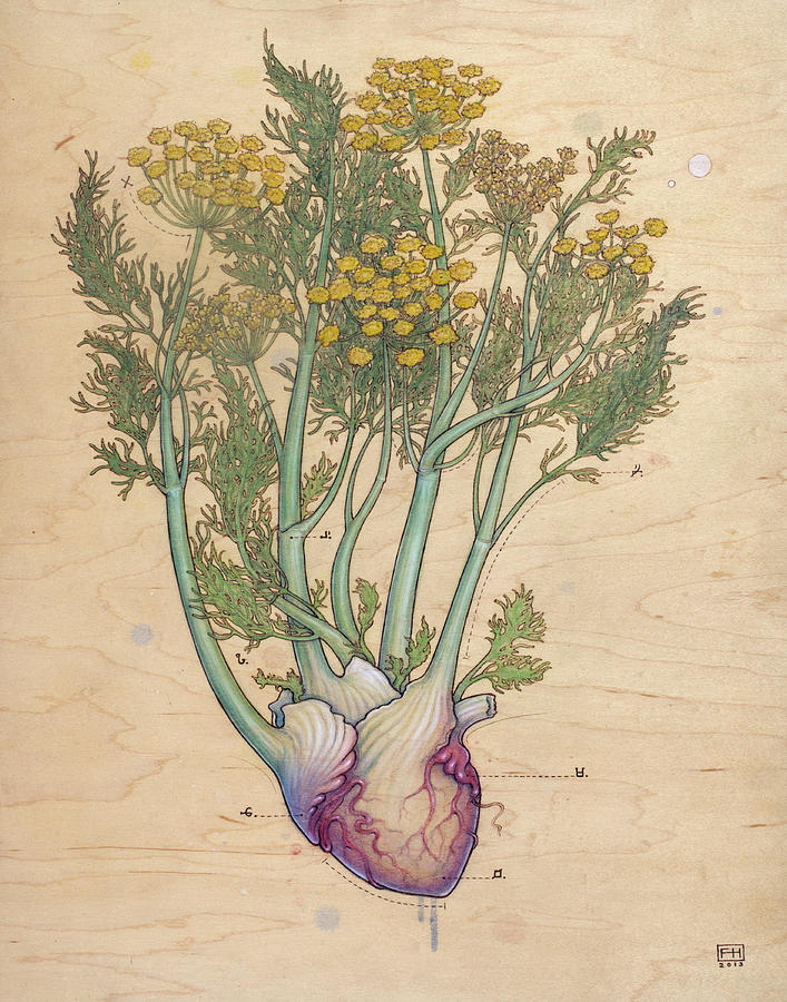 Fennel Heart Pyrography by Fay Helfer