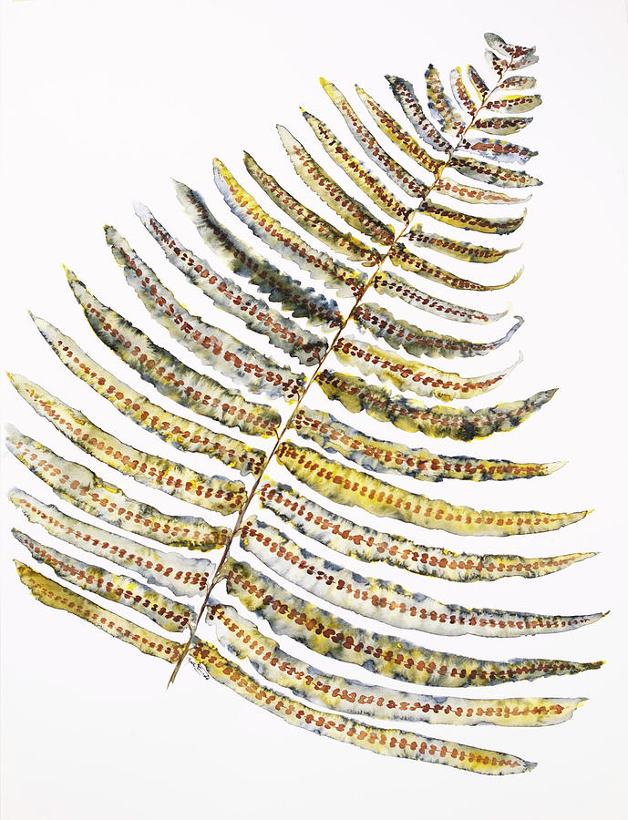 Watercolor Painting - Fern Leaf by Kelly Edwards