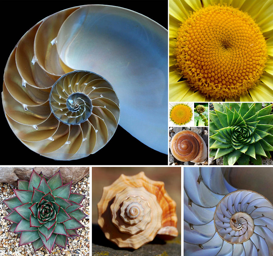 Fibonacci Spirals in Nature Digital Art by Dean Marston