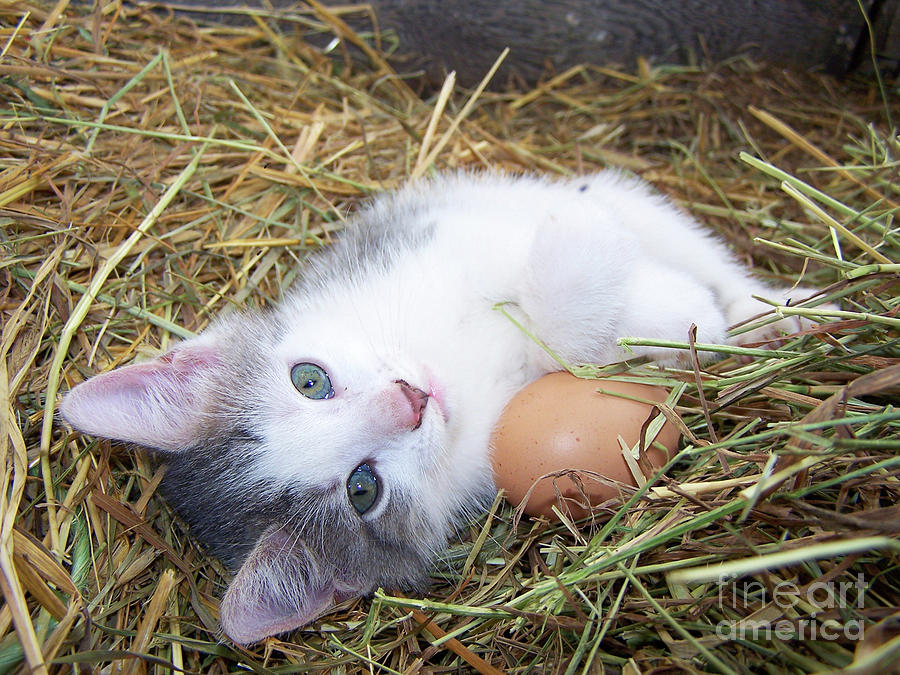 Fiddle the Egg-sitter Kitten by The Ford Family
