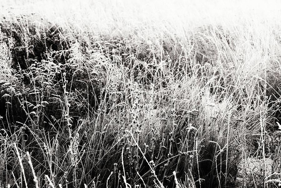 Field of Plants Winter Snow Frost by John Williams