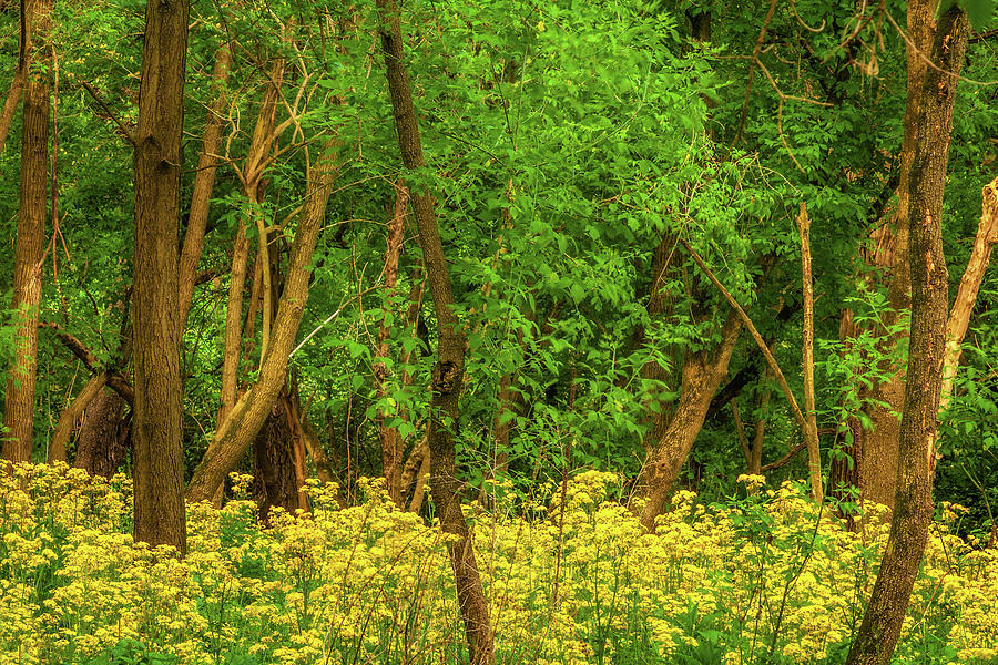 Field Of Yellow Photograph