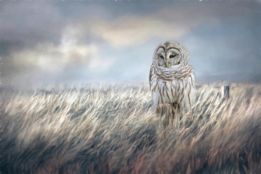 Field Seeker by Jai Johnson