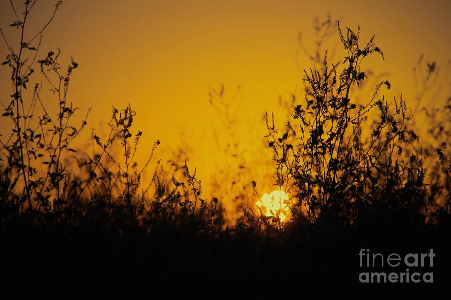 Field Sunset by Bob Mintie