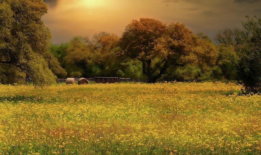 Fields Of Gold Digital Art