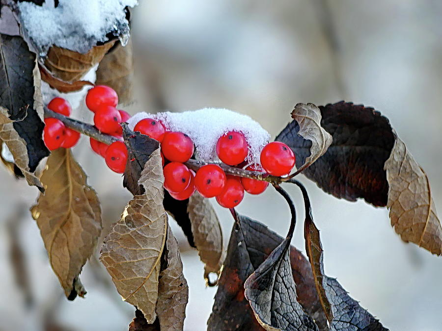 Autumn Photograph - First Snow by Lyuba Filatova