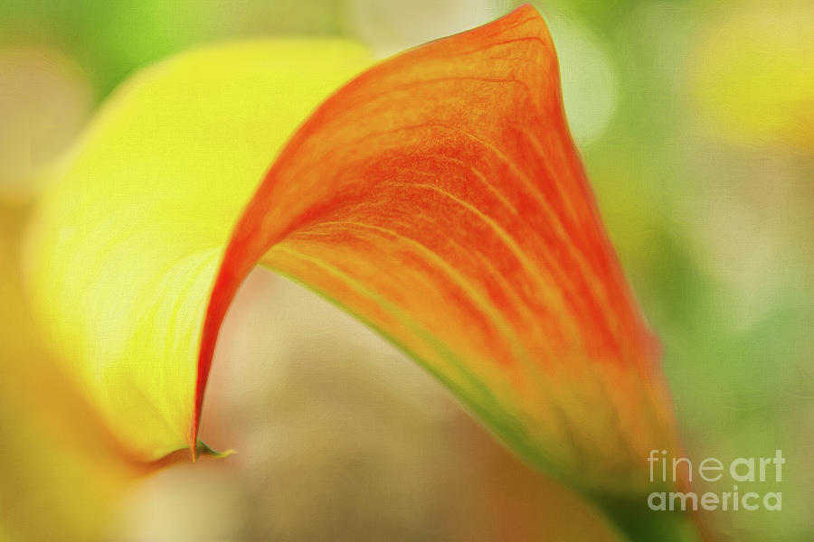 Lily Photograph - Fill With Love And Mix Around by Marilyn Cornwell