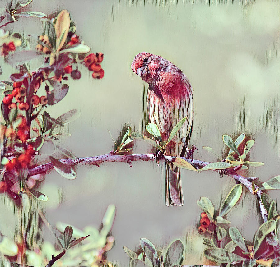 Finch On Red Berry Bush 2 In Cranberry Abstract Mixed Media