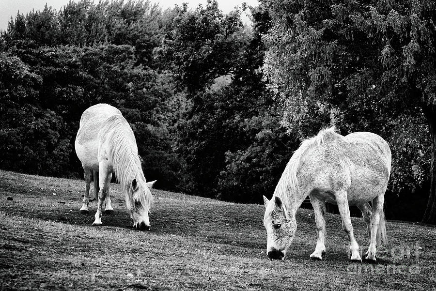 Fine Art Wild Horses In Black And White Photograph