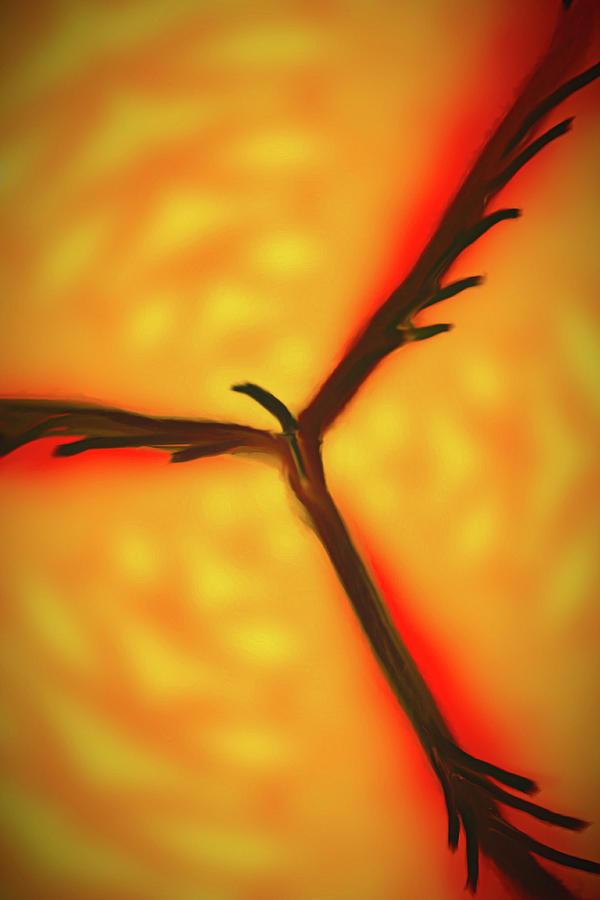 Abstract Photograph - Firebird by David Beard