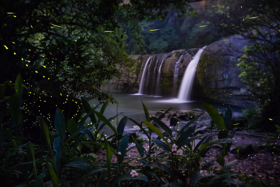 Firefly flying by the waterfall Photograph by WanRu Chen