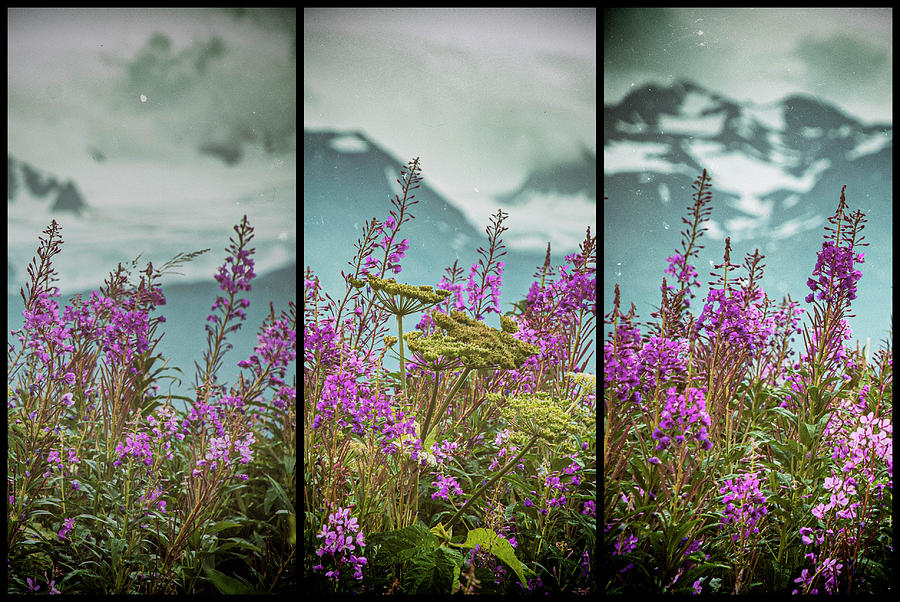 Fireweed Photograph - Fireweeds by Jim Cook