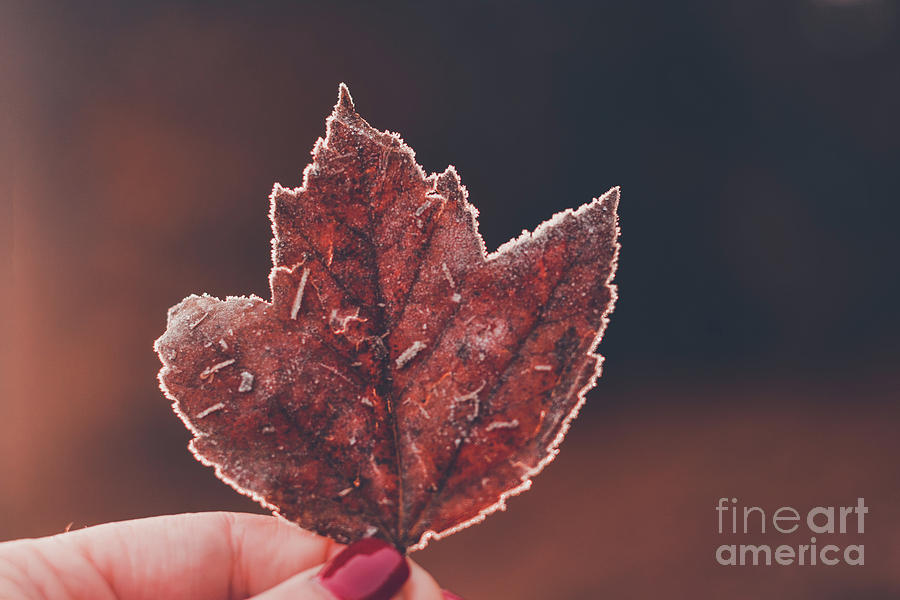 First Frost 2018- Macro by Adrian DeLeon