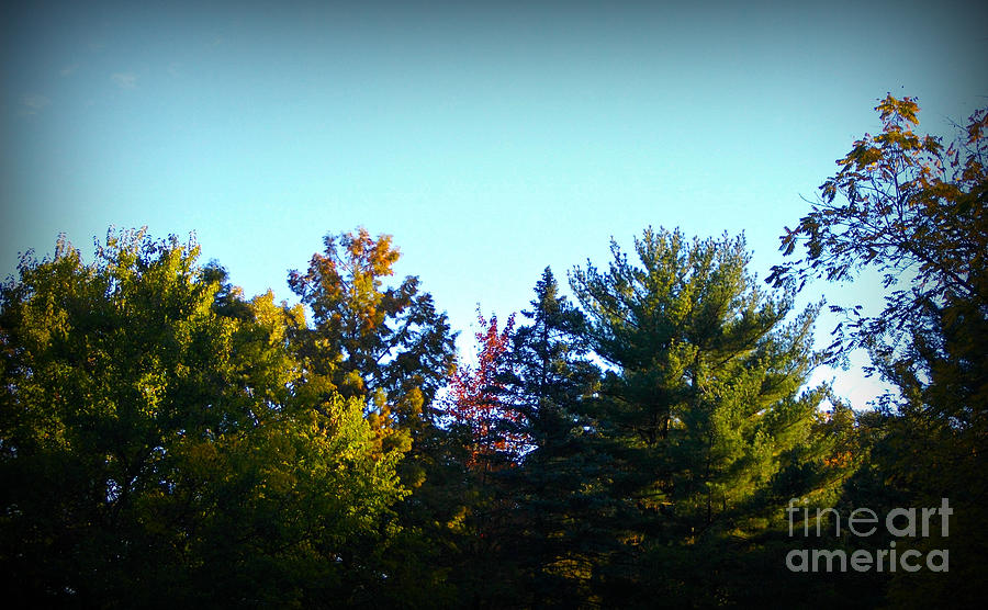 Landscape Photograph - First Signs of Fall by Frank J Casella