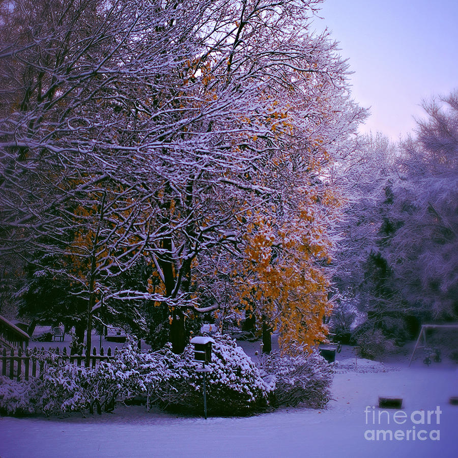 Gold Leaves Photograph - First Snow After Autumn - Square by Frank J Casella