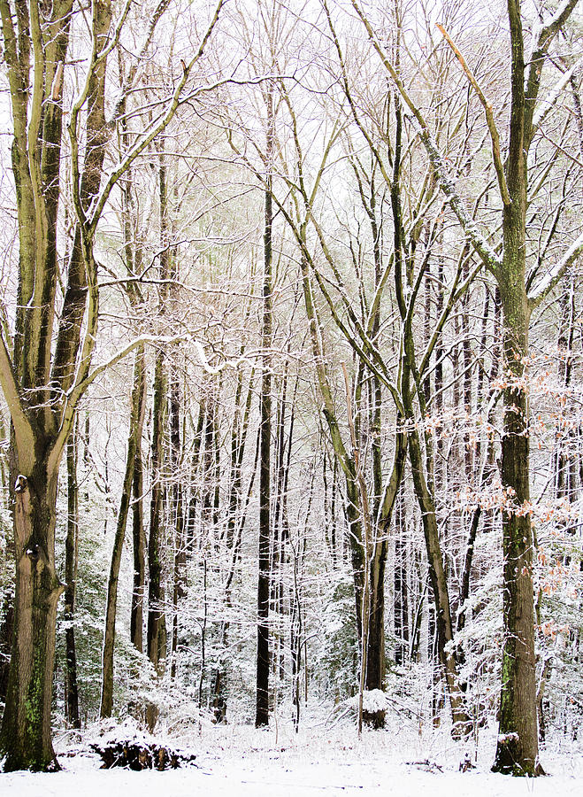 First Snow by Stacy Abbott