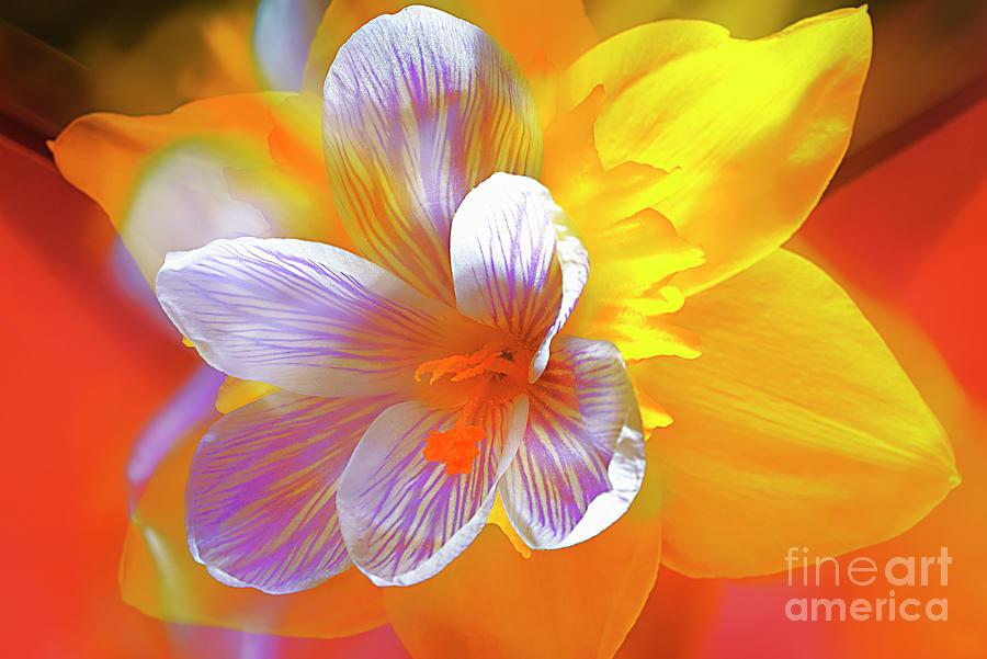 Flowers Photograph - First Spring Flowers # 6. by Alexander Vinogradov