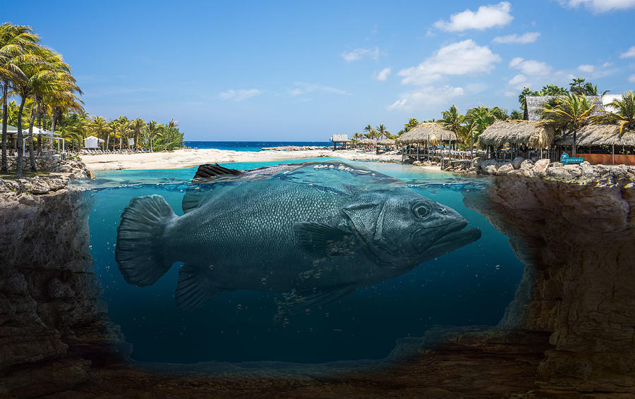 Fish And Island Surreal Digital Art