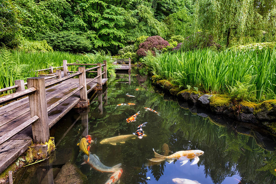 Fish Pond at Portland Japanese Garden by Mike Centioli