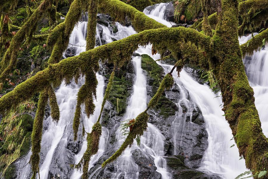 Fishhawk Falls and Maple Tree by Robert Potts