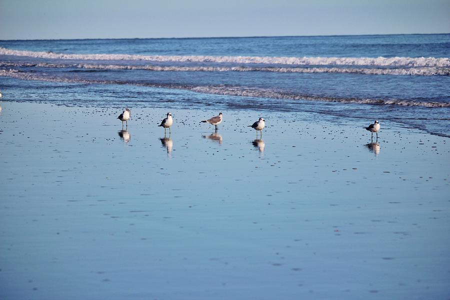 Five Seagulls by Cynthia Guinn
