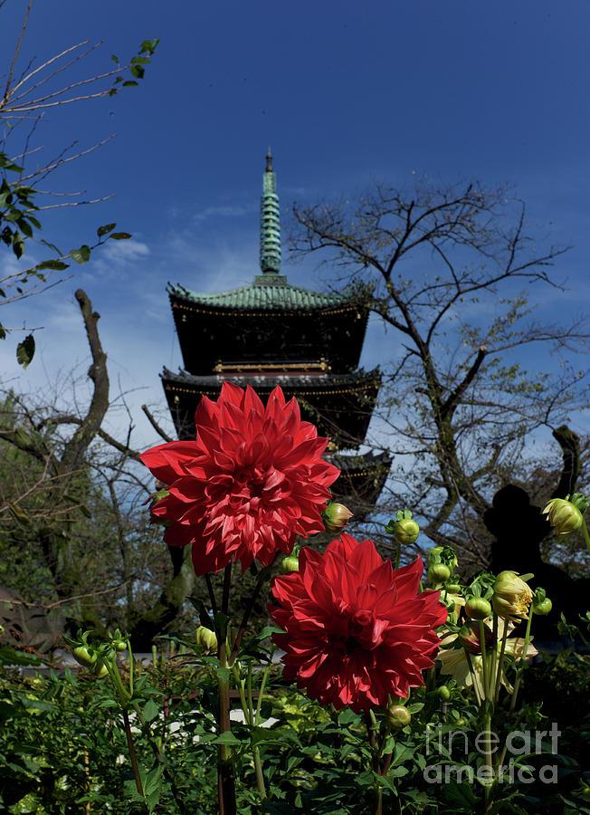 Five Story Pagoda Photograph