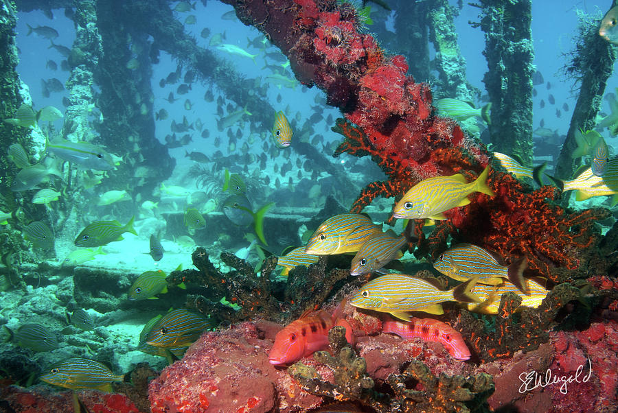 Underwater Photograph - Flagler Barge 1 by Steve Weigold